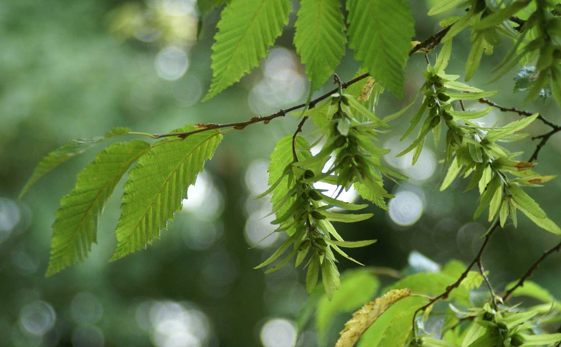 photo de fond : Des feuilles