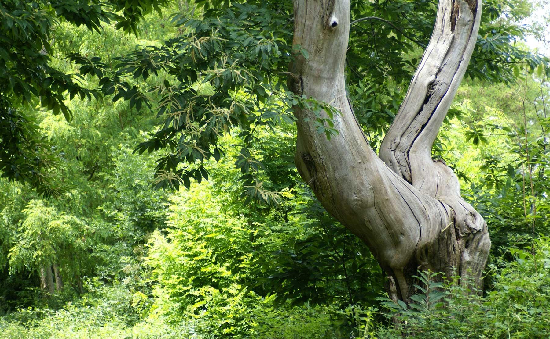 photo de fond : Un arbre