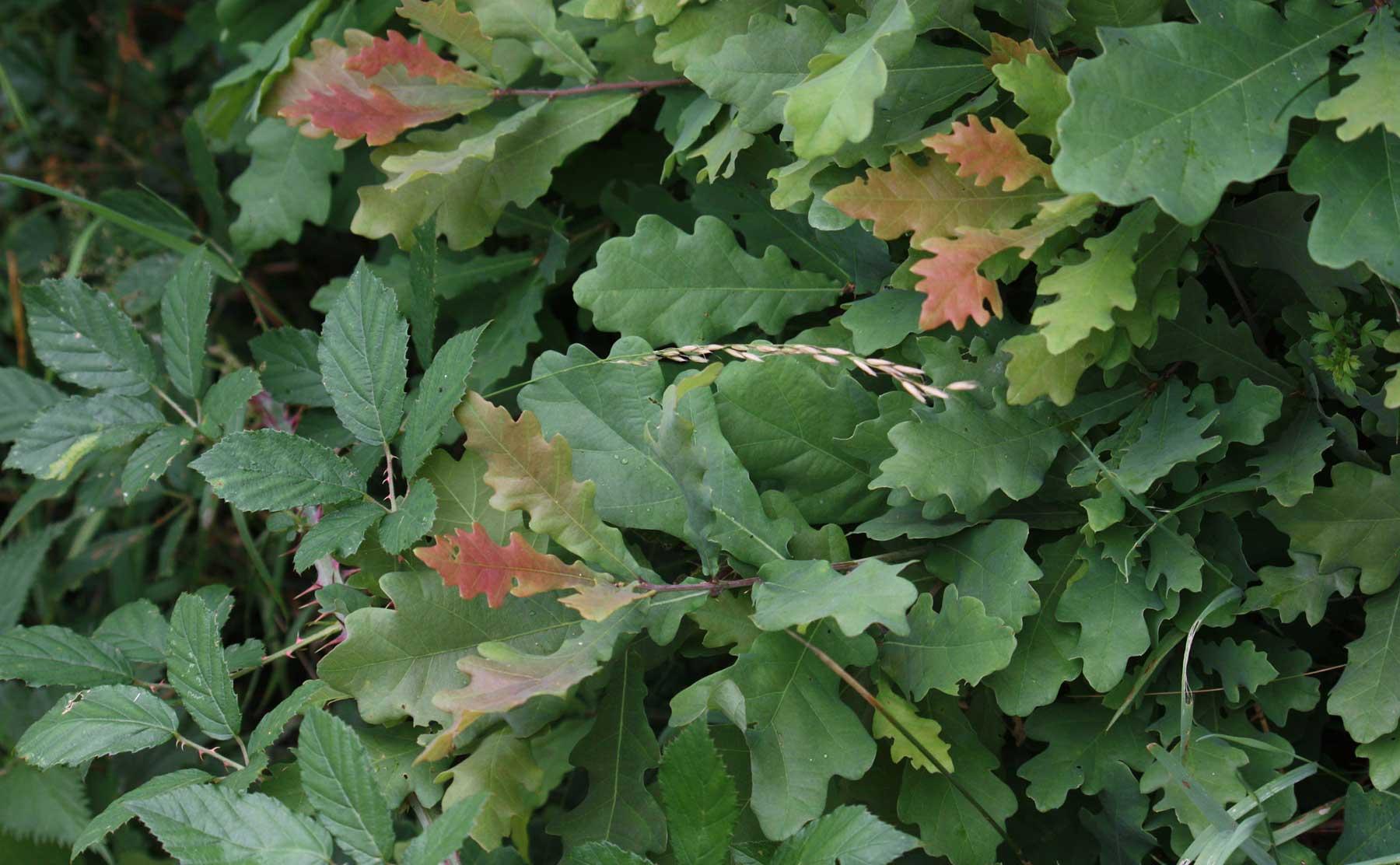 photo de fond : Un buisson