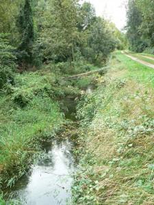 Marais de l'étang de la Pallu
