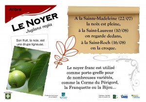 Panneau circuit botanique Montalembert : noyer