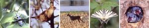 Frise biodiversité animale
