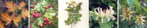 Frise biodiversité végétale