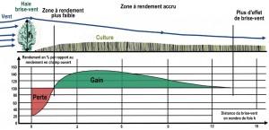 Schéma des gains de rendement dûs aux effets Brises vent