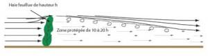 Schéma de l'effet Brise vent d'une haie