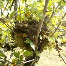 Photo nid