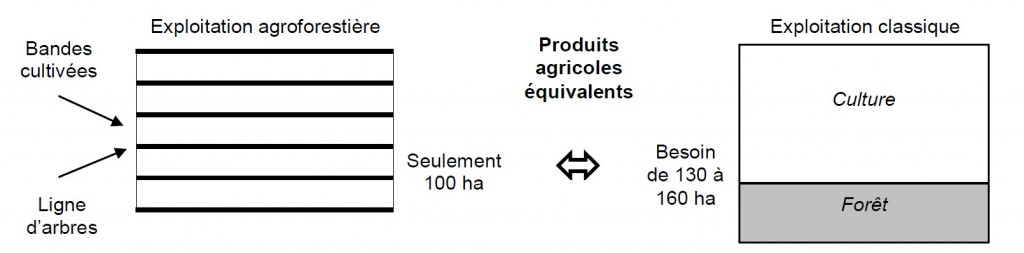 Schéma agroforesterie