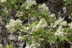 Photo fleurs cormier