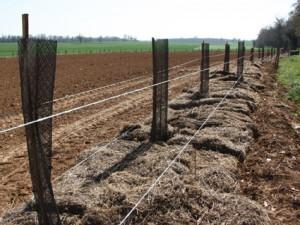 Photo plantation