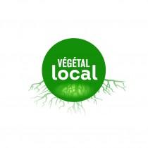 vegetal_local