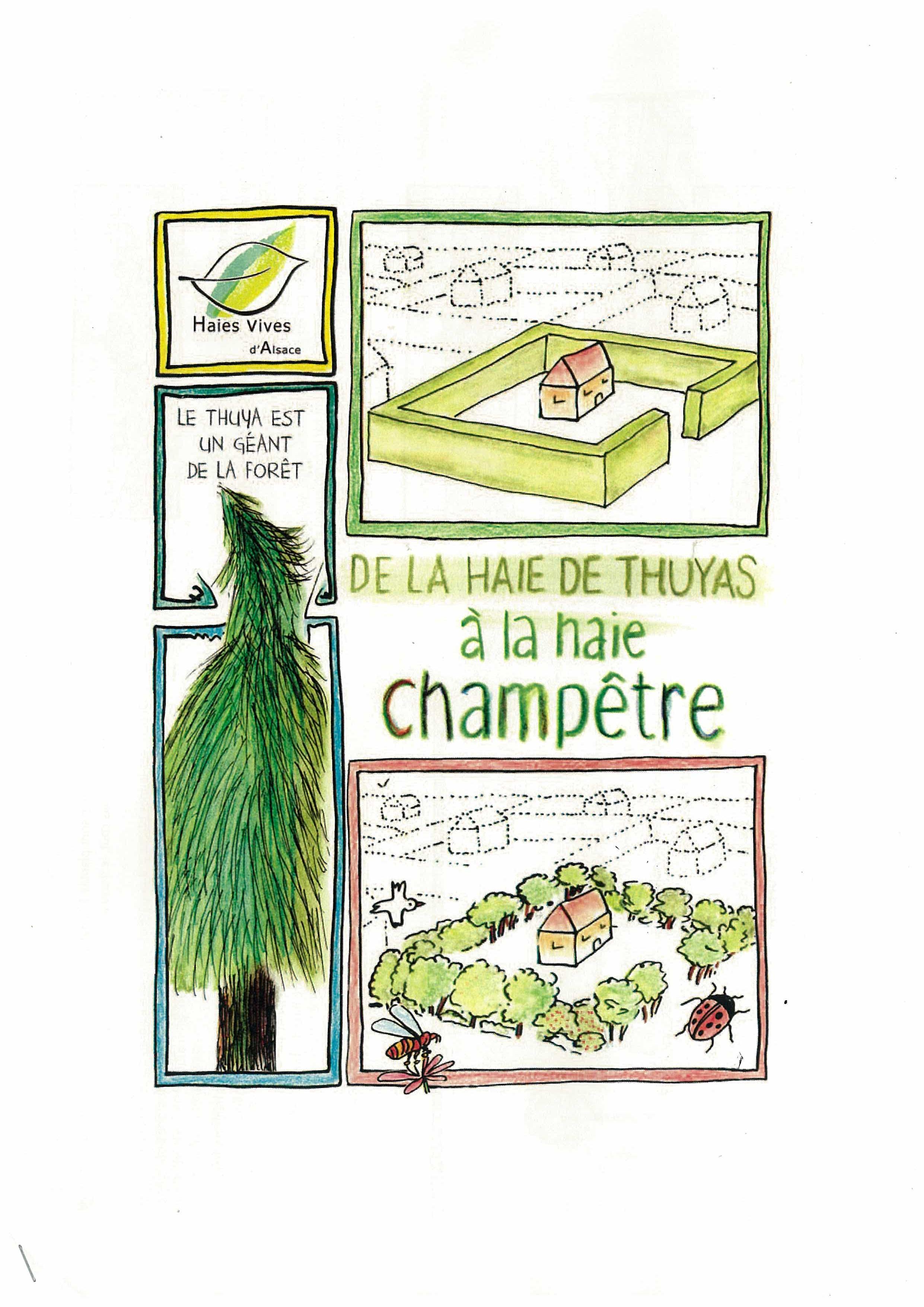 Passer du thuya la haie champ tre mode d emploi prom 39 haies en nouvelle aquitaine - Maladie des thuyas ...