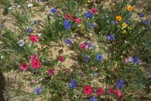 bordures fleuries ECHIRE (4)