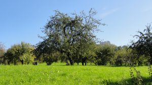orchard-5485