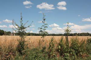 sp agrof- villanneau_Steblandine (2)