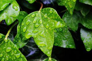 ivy-771141