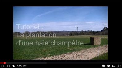 Image_tuto_plantation